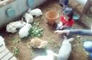 @kuntum farm field 5